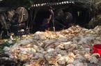 """Nhiều trại gà vịt """"đổ gục"""" vì sự cố mất điện, người nuôi gia cầm choáng váng bỏ nghề"""