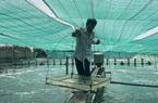 """""""Liều"""" nuôi tôm công nghệ cao dày đặc trên ao nổi, một nông dân tỉnh Đồng Nai thu 10 tỷ mỗi năm"""