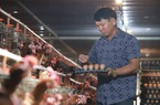 Clip: Bỏ lò gạch ra làm trang trại, nông dân Hải Dương thu chục triệu mỗi ngày