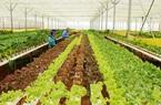 TP.Hồ Chí Minh: Hơn 840 tỷ đồng phát triển nông nghiệp an toàn