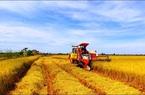 Ngành nông nghiệp tăng trưởng chậm nhất 4 năm nhưng nhiều tiềm năng phục hồi