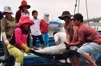 """Gỡ """"thẻ vàng"""" của EU: Mạnh tay xử lý tàu cá vi phạm vùng biển nước ngoài"""