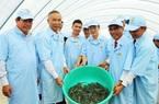 Đoàn lãnh đạo Bộ NNPTNT và các tỉnh ĐBSCL tham quan khu phức hợp sản xuất tôm chất lượng cao Việt – Úc