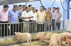Thứ trưởng Bộ NNPTNT: Giá lợn hơi giảm nhiệt, cuối năm cung - cầu thịt lợn sẽ gặp nhau