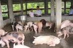 Bắc Kạn: Hơn 700 tỷ đồng giúp nông dân làm ăn, tăng hộ khá, giàu
