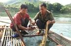 Tuyên Quang: Bắt 316 tấn cá đặc sản đắt tiền, dịch giã như thế, dân bán cá đi đâu mà hết sạch?