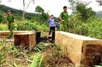 Mời nguyên Giám đốc Sở, Chi cục trưởng Kiểm lâm… làm rõ trách nhiệm để mất rừng