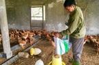 Quảng Bình: Hội nông dân hỗ trợ giống cây, con giống cho hội viên nghèo vượt khó