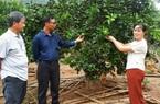 """Hà Giang: Nuôi cá quý hiếm đặc sản và trồng vườn cây """"lung tung"""", một nông dân bắt đất hoang """"nhả vàng"""""""
