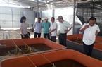 Trại nuôi lươn không bùn trên cạn lớn nhất tỉnh Bạc Liêu có gì độc đáo mà tấp nập người tìm đến xem?