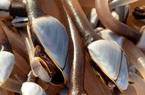 Thành tỷ phú nhờ vớt được sinh vật biển quý hiếm trôi dạt vào bờ