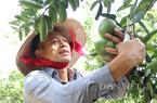 Bình Dương: Tỷ phú nông dân lãi 8 tỷ/năm nhờ chăn nuôi công nghệ cao, trồng trái cây đặc sản và nuôi chim yến