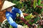 Lô cà phê đầu tiên xuất sang EU hưởng thuế suất 0%: Cơ hội rộng mở