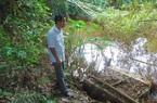 Thái Nguyên: Nước ao đổi màu, cá chết hàng loạt, nghi do nhiễm độc nguồn nước