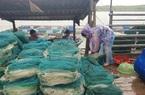 Hà Tĩnh: Nông dân hối hả đưa cá đặc sản nuôi lồng bè chạy bão số 5