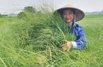 Video: Tạo ra dòng sữa sạch, nữ nông dân Hà Nam thu tiền tỷ mỗi năm