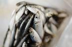 Trung Quốc lại phát hiện virus SARS-CoV-2 trên bao bì hải sản nhập khẩu Indonesia