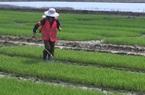 Làm không đủ ăn, nông dân Trung Quốc kẻ rời làng, người đi...bán bảo hiểm