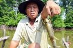"""Nuôi tôm hung dữ, bắt cá leo cây, và cơ man đặc sản """"độc, lạ"""" ở tỉnh Cà Mau, nhìn thôi đã thấy thèm"""