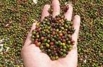 """Nông sản Tây Nguyên gặp khó khi """"bước chân"""" vào thị trường EU"""