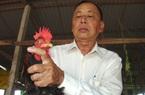 """Ông nông dân được mệnh danh là """"quái kiệt"""" trong nghề nuôi loài gà đặc sản ngon nức tiếng đất Gò Công"""