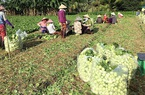 Đất nông nghiệp có được cấp Sổ đỏ, thủ tục thế nào?