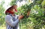 Bình Dương: Kinh tế tập thể tạo động lực phát triển nông thôn