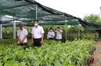 Agribank đồng hành cùng làng nghề sản xuất cây giống