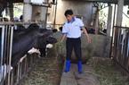 Tháo gỡ vướng mắc về bảo hiểm nông nghiệp tại Lâm Đồng
