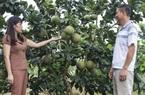 Tuần Giáo: Đẩy mạnh xúc tiến đầu tư vào nông nghiệp chất lượng cao
