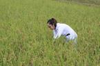 """Thông tin sai sự thật 90% người Việt ăn gạo """"bẩn"""": Doanh nghiệp, nông dân bị ảnh hưởng có thể khiếu nại, khởi kiện"""