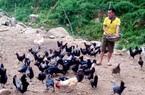 Yên Bái: Nuôi thứ gà đặc sản đen toàn tập, 9X mời khách vừa ăn thịt gà vừa ngắm biển mây trên đỉnh núi cao