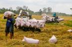 Giá gạo xuất khẩu của Việt Nam cao nhất từ cuối năm 2011 đến nay