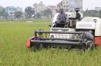 9 loại gạo thơm được đặc cách hưởng ưu đãi thuế sang EU là những giống gì?