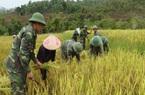 """Khi lính biên phòng thành """"chuyên gia nông nghiệp"""" cùng dân trồng lúa nước"""