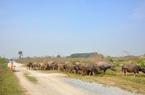 """Hà Nội liên tiếp thu hồi dự án nhà ở """"ôm"""" đất bỏ hoang"""
