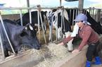 Bảo hiểm nông nghiệp tại Việt Nam: Vừa hay vừa may, vẫn khó triển khai