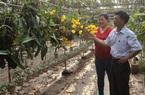 Tổng kết 10 năm Đề án đổi mới và nâng cao hoạt động Quỹ HTND: Nguồn lực lớn tạo sức bật cho nông dân