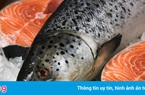 Cá hồi Sa Pa giảm giá sâu, chỉ còn 110.000 đồng/kg