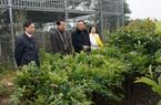 Thứ trưởng Hà Công Tuấn: Thái Nguyên cần phát triển rừng trồng gỗ lớn, hướng tới xuất khẩu