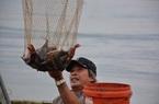Quảng Ngãi: Nuôi loài cá mới lạ body săn chắc vây đỏ như son ở dưới sông, nông dân mong đổi đời