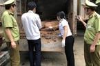 Gia tăng vận chuyển trái phép lợn qua biên giới, Bộ NNPTNT đề nghị ngăn chặn ngay