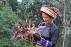 Lào Cai: Khoa học và công nghệ thúc đẩy phát triển vùng dân tộc thiểu số