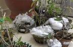 Lâm Đồng: Công an bắt nhóm đối tượng chuyên trộm phong lan đột biến, giá trị tới 1 tỷ đồng