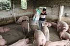 Giá nông sản hôm nay (13/1): Lợn hơi đồng loạt tăng mạnh, cao nhất 85.000 đồng/kg