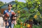 Nuôi con gì bán Tết: Gà Đông Tảo chân khổng lồ giá tiền triệu, tiết lộ từ những con gà buộc chân đánh dấu