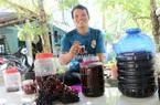 Kiên Giang: Hái chùm quả dại trong rừng đem ủ ra thứ rượu thơm ngon bổ dưỡng, ai nếm cũng bất ngờ
