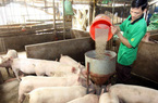 Giá nông sản hôm nay (17/1): Lợn hơi liên tục tăng giá trong tuần, tiêu chưa có dấu hiệu khởi sắc