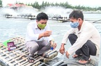 Quảng Trị: Nuôi tôm công nghệ cao 3 giai đoạn, sau 4 tháng nông dân bất ngờ bắt bán 5,5 tấn