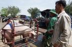 Giá nông sản hôm nay (20/1): Lợn hơi cả nước tiếp tục tăng, thấp nhất 80.000 đồng/kg